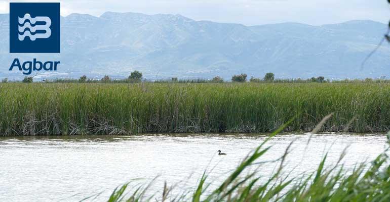 Humedales del Delta del Ebro