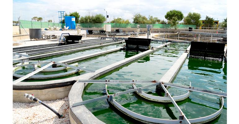 aqualia.cenit-vida-microalgas