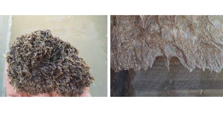 articulo-tecnico-crecimiento-biofouling-briozoos-cordylophora-caspia-infraestructura-riego-valle-guadalquivir