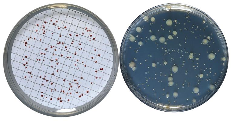 bioser-analisis-aguas-medios-cultivo