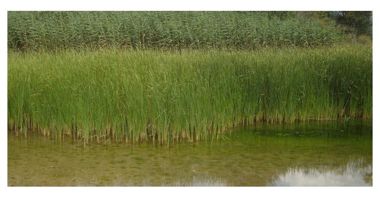 ceab-csic-contaminacion-nitratos-rios