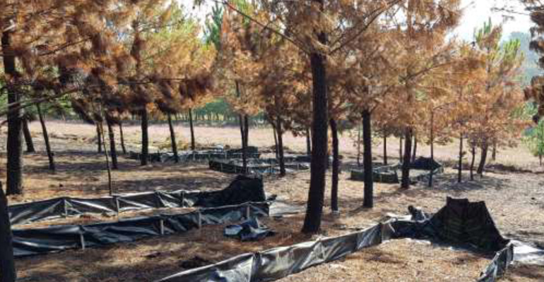 cetim-life-reforest-proyecto-agua-incendio-forestal