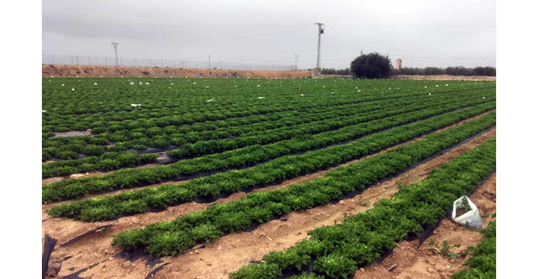 dam-proyecto-phertilizer-fertilizante-residuos-depuradora-aguas-residuales-resultados