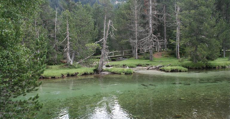 fnca-informe-borradores-planes-hidrologicos-cuenca