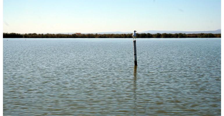 iiama-albufera-calidad-ambiental-humedal