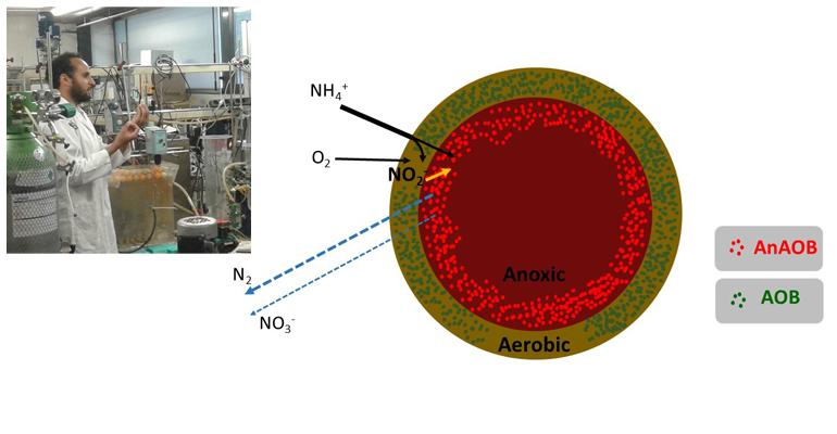 lequia-estudia-proceso-pna-anammox-linea-principal-estacion-depuradora-aguas-residuales-urbanas