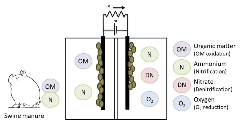 lequia-tesis-sistemas-bioelectroquimicos-tratamiento-purines