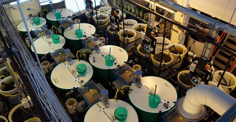 procesos-sistemas-scan-monitorizacion-calidad-agua-sistemas-recirculacion-acuicultura