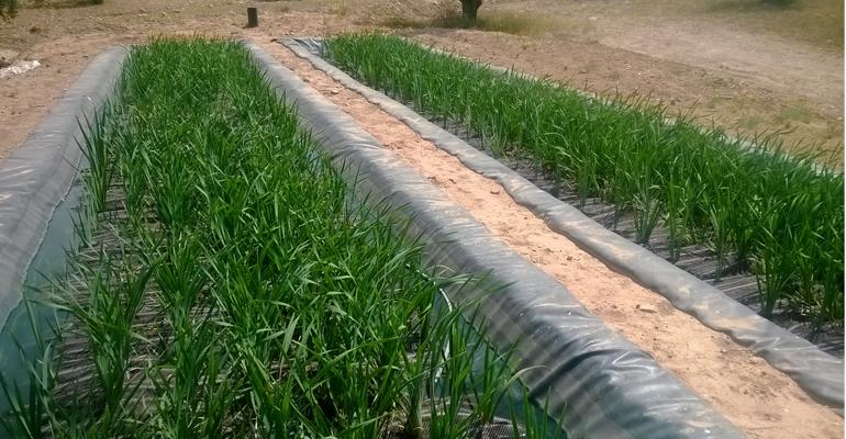 projar-depura-aguas-contaminadas-uranio-balsas-portugal
