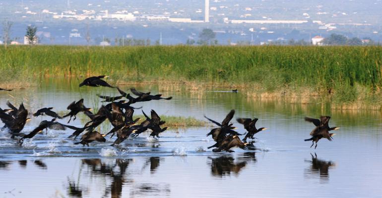 suez-dia-medio-ambiente-cuidar-biodiversidad-proteger-salud-humedal